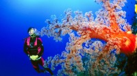Ospreay_softcoral_diver_800x450